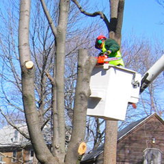 Removing damaged or diseased trees