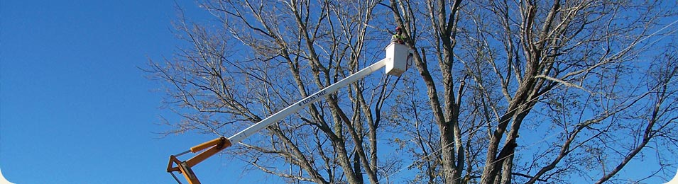 tree services for commercial utilities