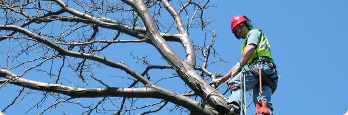 commercial tree services