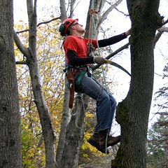 Tree Pruning Lucas Tree Experts
