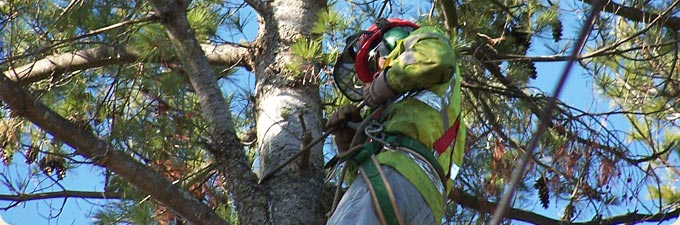 Professional tree pruning services