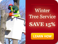 Winter Tree Service