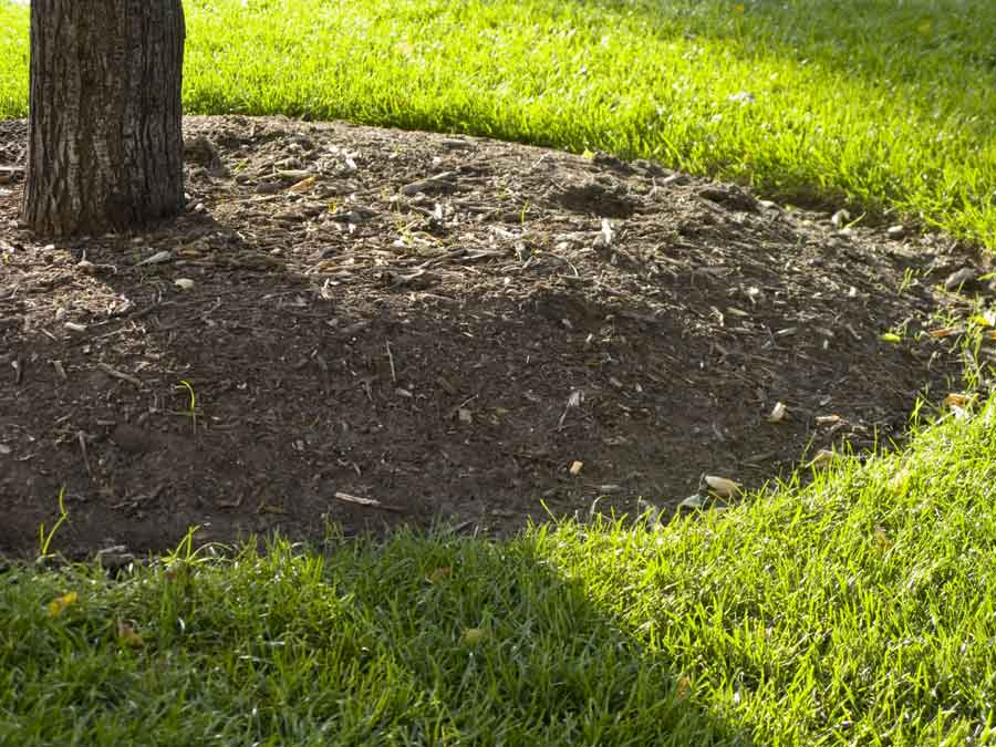 Five top tree care tips for summer lucas tree experts top tree care tips for summer sciox Image collections