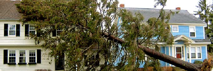 StormLine Service for storm damaged trees